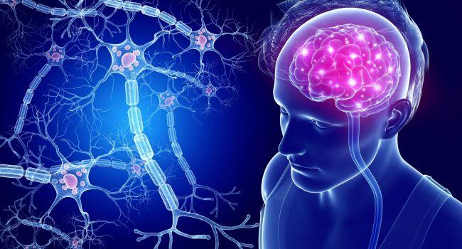 Человеческий мозг продолжает вырабатывать новые нейроны до глубокой старости – ученые