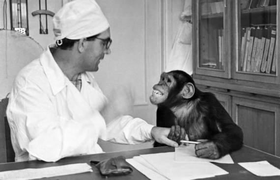 Как советские учёные скрещивали обезьяну с человеком