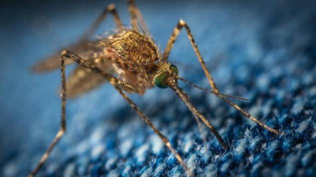 Медики рассказали, как часто можно пользоваться спреями от комаров