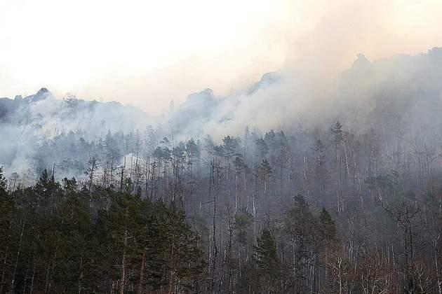 Горит миллион гектаров леса: в России вспыхнули масштабные пожары