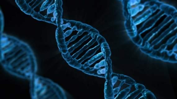 5 вещей, которые определяют гены