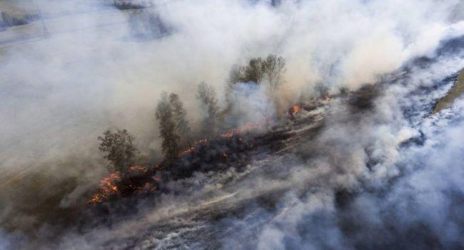Доберутся до самой Арктики: экологи напугали заявлением о пожарах в Сибири