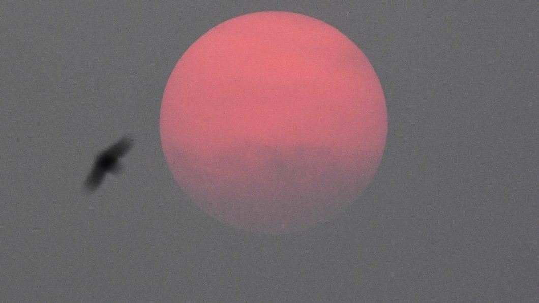 «Смог стоит, солнца не видно»: дым сибирских пожаров дошел до Арктики. ВИДЕО