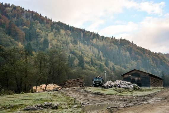 Польша защитила свои леса от Евросоюза. А Украина?