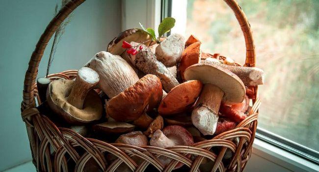 Не теряйте времени зря: Медики рассказали о том, что нужно делать при отравлении грибами