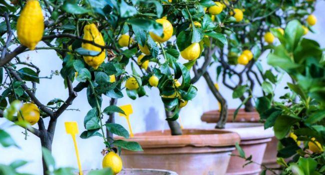 «Будете жить без микробов в доме»: Эксперты рассказали о самых полезных комнатных растениях