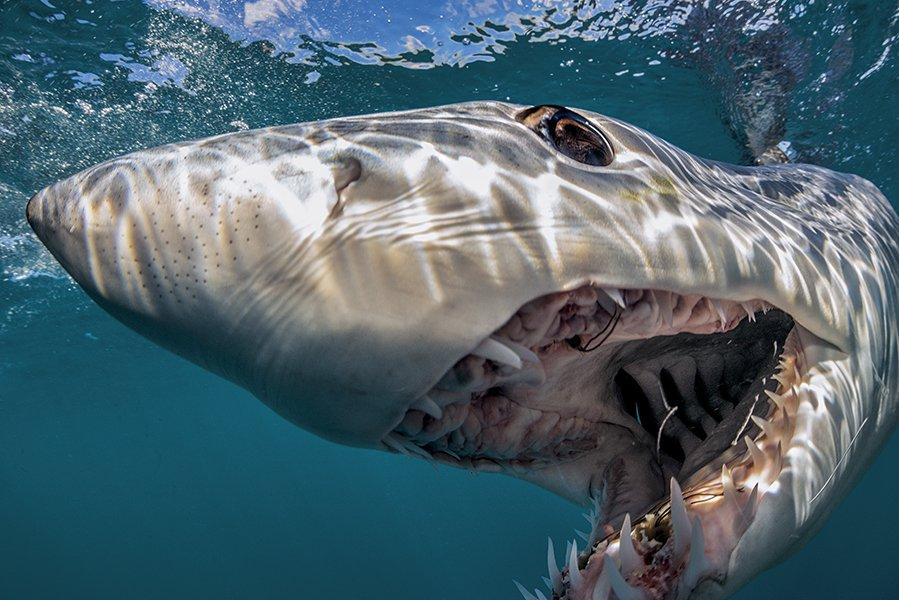 Волосы дыбом: акула сбила ребенка в воду