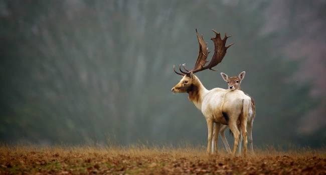 Все еще изучают: ученые заявили об открытии 70 новых видов живых существ в этом году