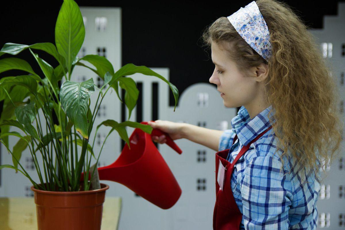 Що робити, якщо ви залили рослину надмірною кількістю води: 10 корисних порад