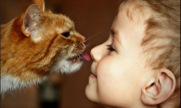 Болезнь, которая развивается у человека из-за наличия кошки