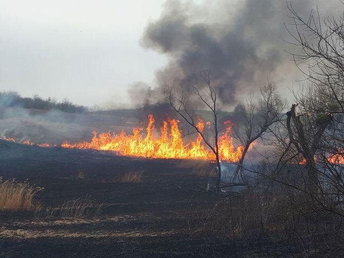 Весняні пожежі нищать країну. Поліція та влада – імпотентні, лісники ще тримаються