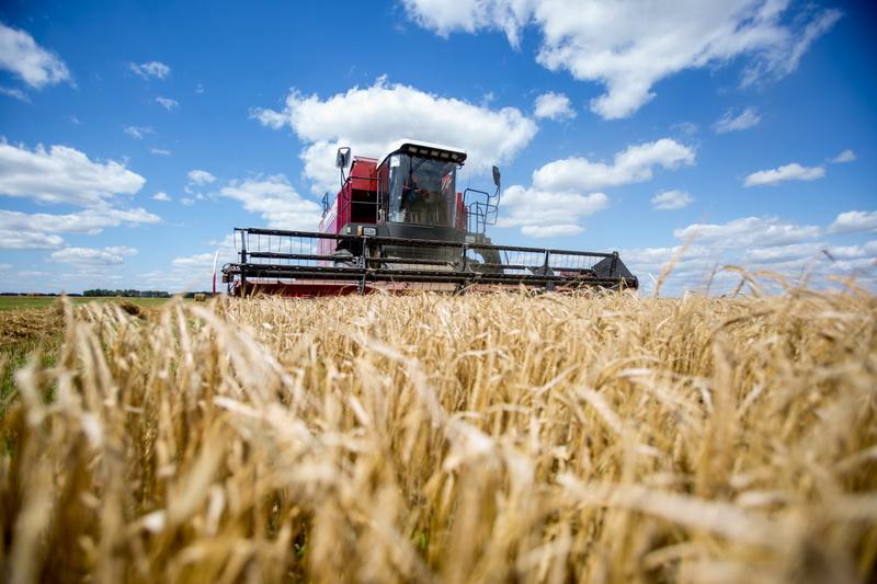 «В 2,5 раза больше, чем необходимо внутреннему рынку»: Минэкономики дало прогноз урожая зерновых