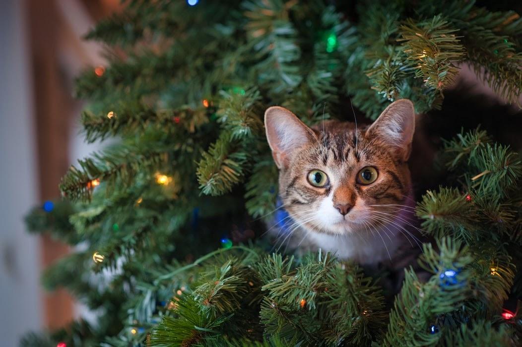 Как защитить искусственную елку от кота?