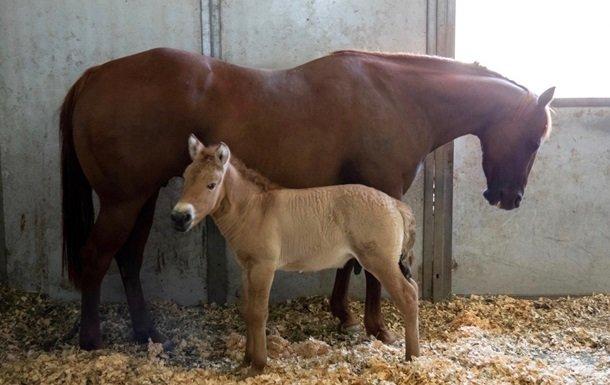 Ученые клонировали ранее умершую лошадь Пржевальского