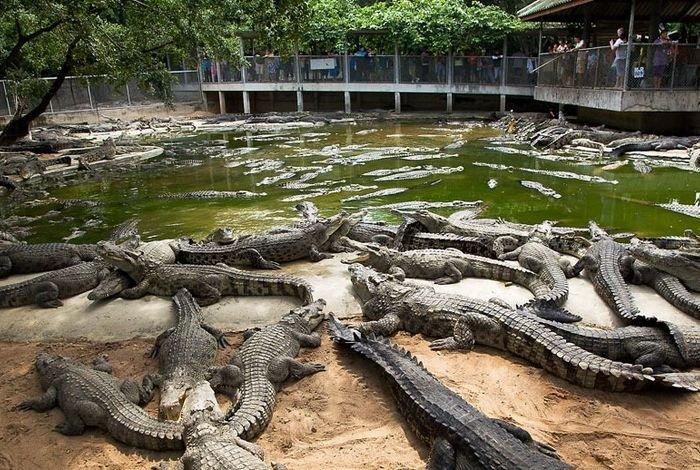 Украинцев собираются кормить мясом крокодилов