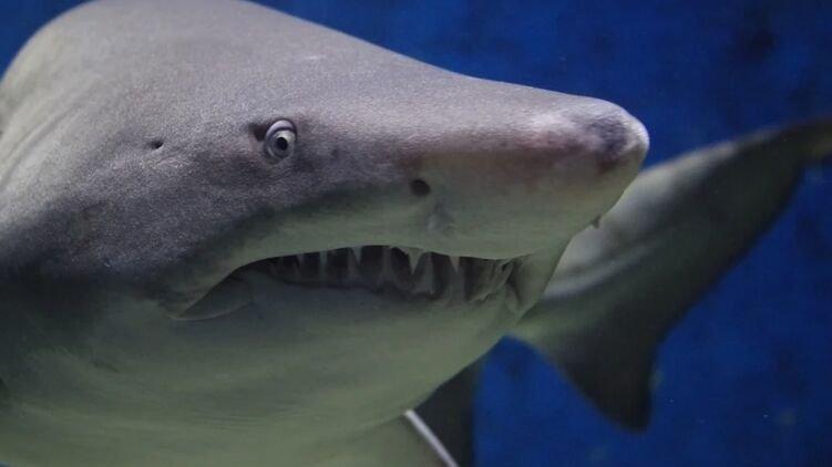 Во время отдыха в Египтена туристов из Украины напала акула