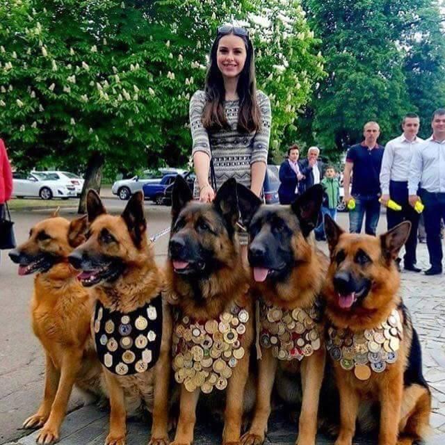 9 зворушливих історій собак із зони АТО