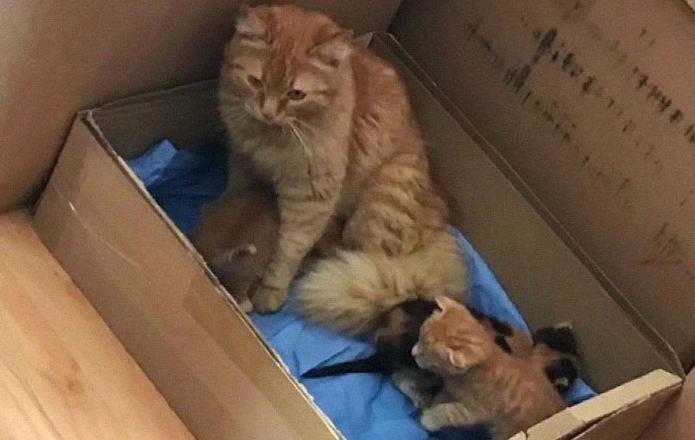 Кошка принесла докторам своих больных котят: такого материнского подвига от нее никто не ожидал