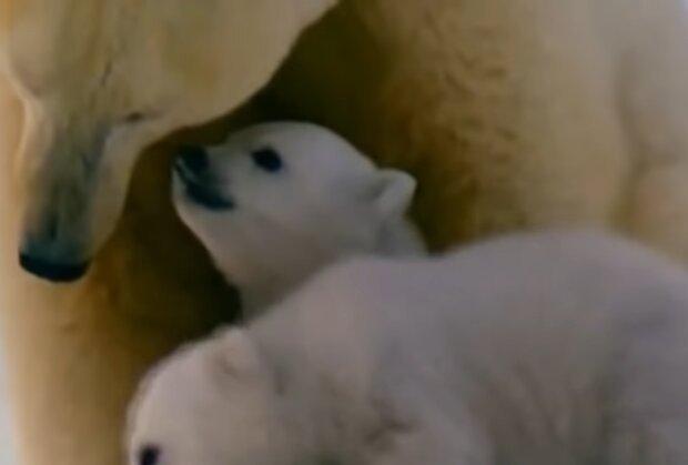 Медвежонок в зоопарке погиб из-за назойливых посетителей