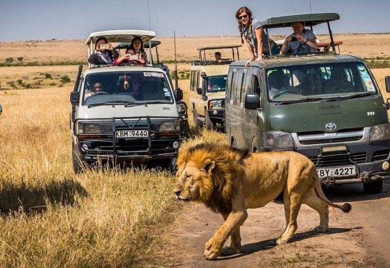 Нелепые законы для водителей в разных уголках мира