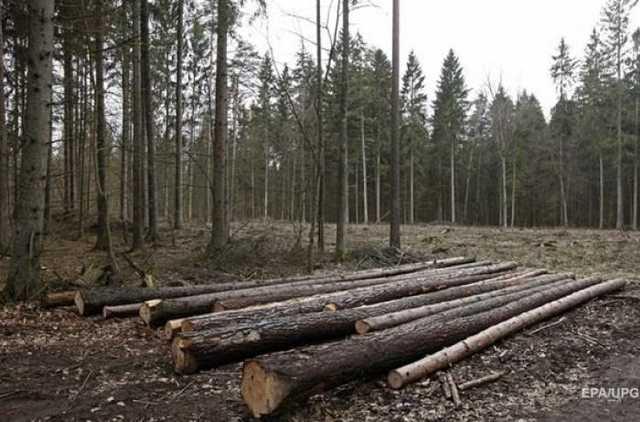 З чим залишимось??? В кабміні слідом за землею хочуть продати і український ліс