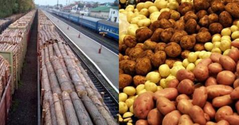 За 10 мішків краденої картоплі — чотири з половиною роки тюрми! Проте, можна вивозити вагонами ліс, красти на мільярди газ, бурштин та інші природні ресурси Главная